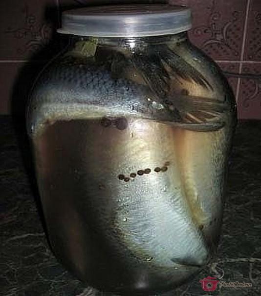 Рыбу уложить в стеклянную ёмкость, в которой будите засаливать. Удобнее…